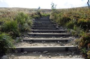 Schody, schody, shody, schody... jak w Casino de Paris - z Przełęczy Goprowskiej na Przełęcz pod Tarnicą